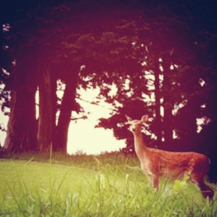 バンビー鹿の子供です