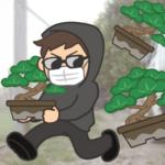 盆栽と泥棒_サンプル画像