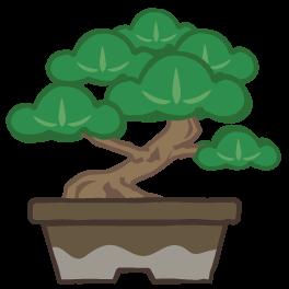 高価で貴重な盆栽